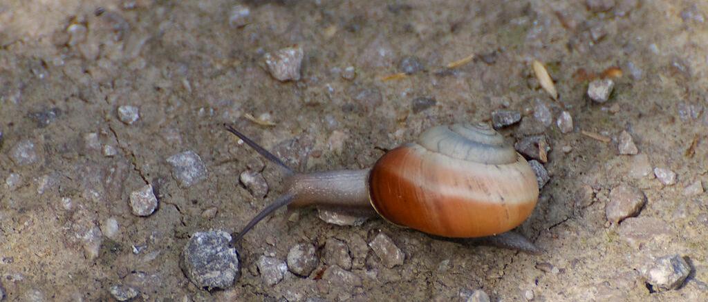 Hoe slakken voorkomen & bestrijden?